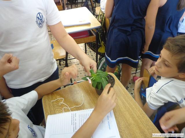 Você está vendo imagens do artigo: Experiência com os Vegetais